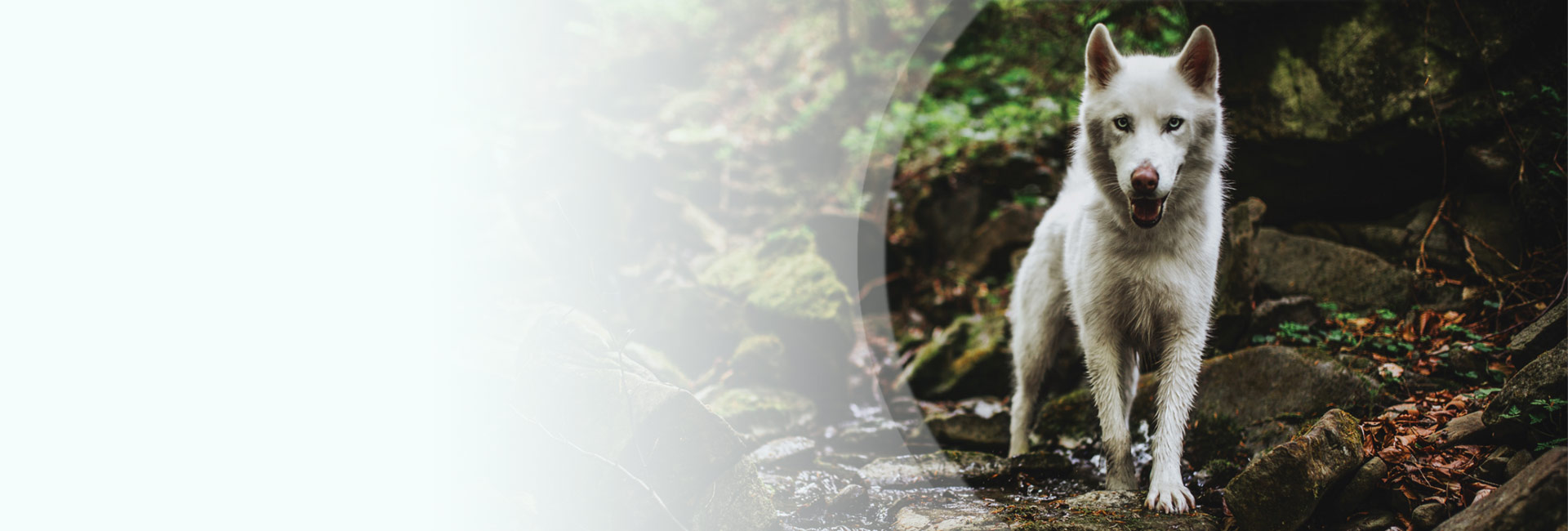VETEXPERT Tiegesundheit Österreich Hundefutter